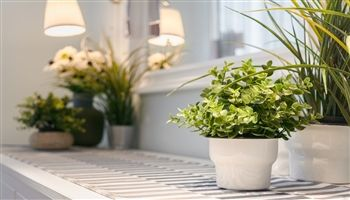 How to Keep Your Office Plants Alive (for longer)
